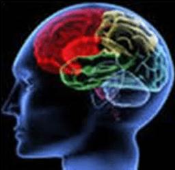 Daño cerebral: claves en la recuperación