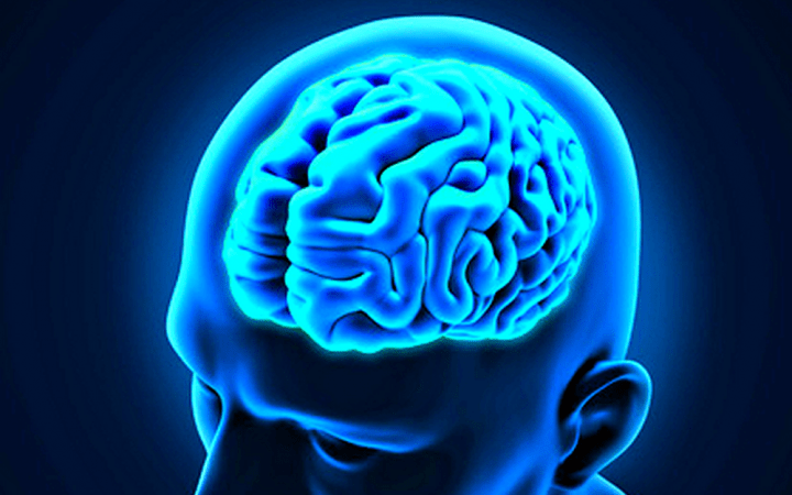 cerebro joven2